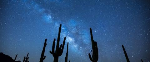 Silouette of cactus plants in the desert, before the Milky Way